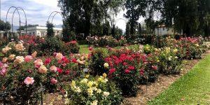 Tour Of The Huntington Library Gardens W Ole La Pasadena Magazine